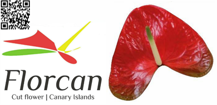 Anthurium Mediano Red Amor